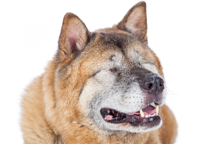 a legjobb látás egy kutyában)