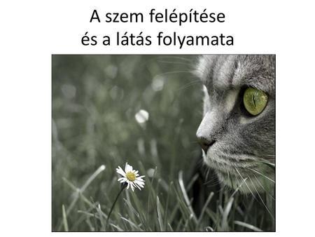 gyenge látás mém)