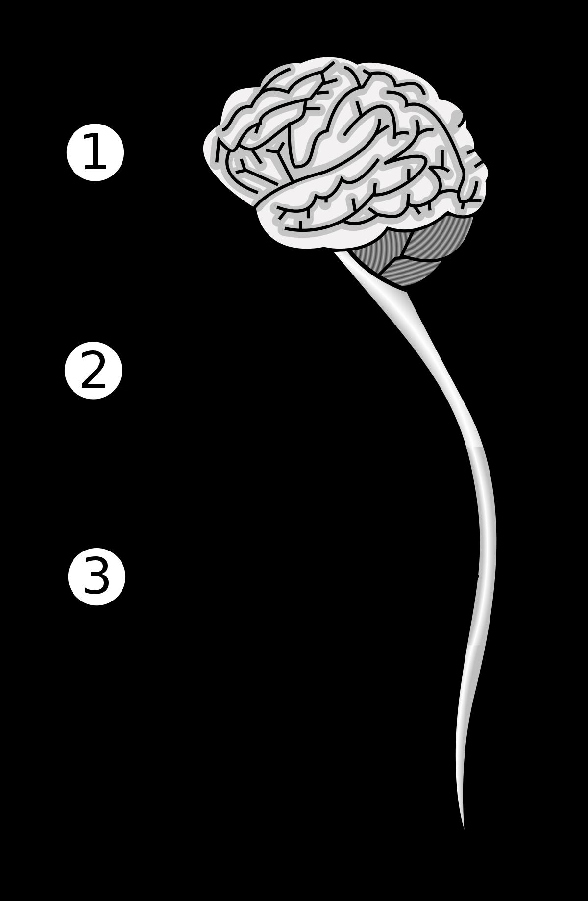 idegrendszeri látás
