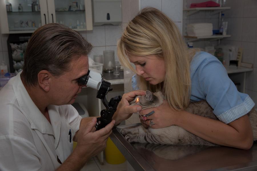 szemészeti betegek gyógykezelése)
