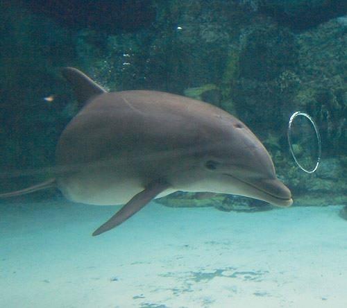17 delfin pusztult el Mauritius partjainál
