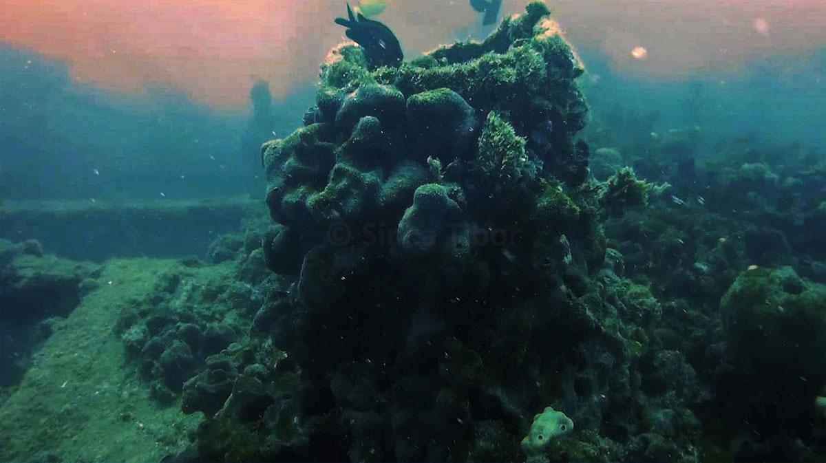tengeri moszat és látás