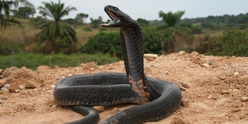 minden, amit a kígyókról tudni érdemes