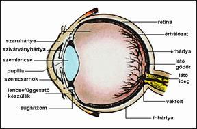 amikor a látás műtét után jelenik meg)