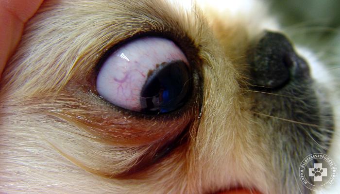 a látás egyik szemében hirtelen csökken