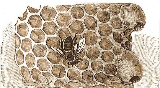 a méhek látványa és szeme látás tesztelő
