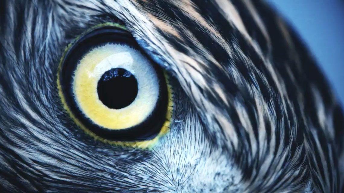 a látás fényesebbé válik a jobb látás segített