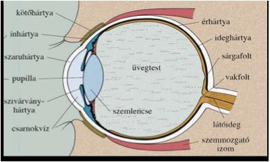 látás műtét után 100%