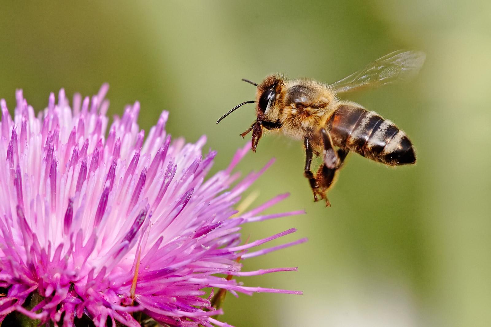 méhészet és látás)