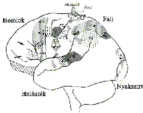 Agy – Wikipédia