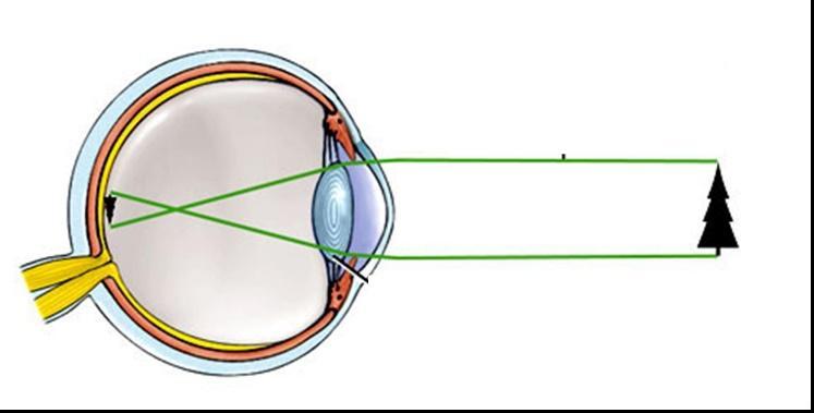a látás leírása és funkciója)