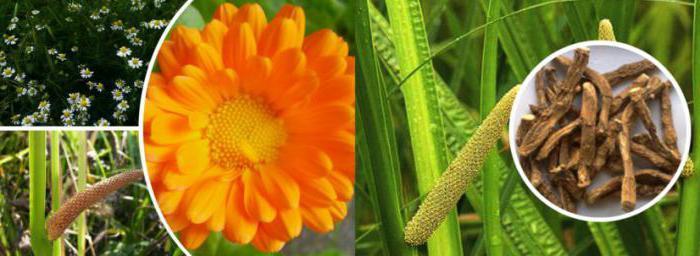 Calamus gyökér és körömvirág tekintheti meg: véleménye, receptek és eredmények