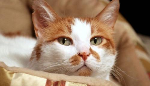 amikor a cica látást kap)