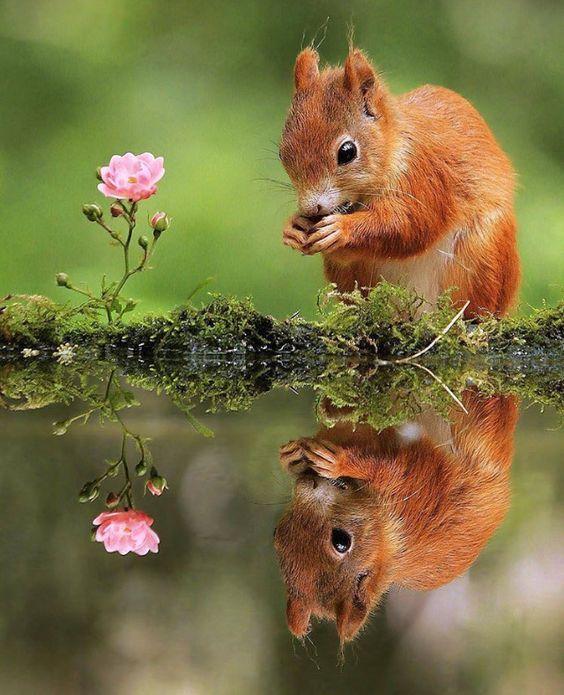 a tükörképe