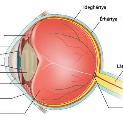 fizikai megterhelés után a látás romlik)
