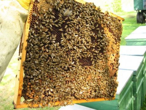 méhészet és látás