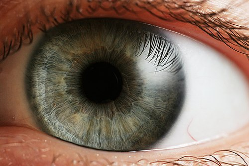 mi a normális ember látása
