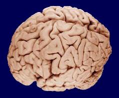 gyenge látás az agy miatt)