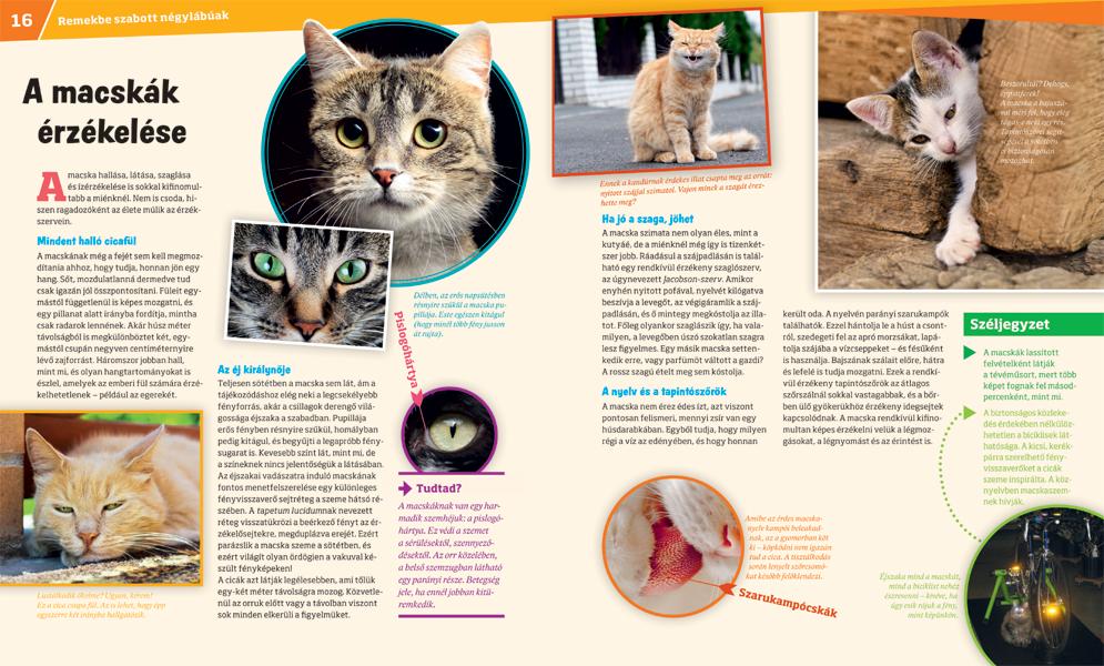 mi a macska látása