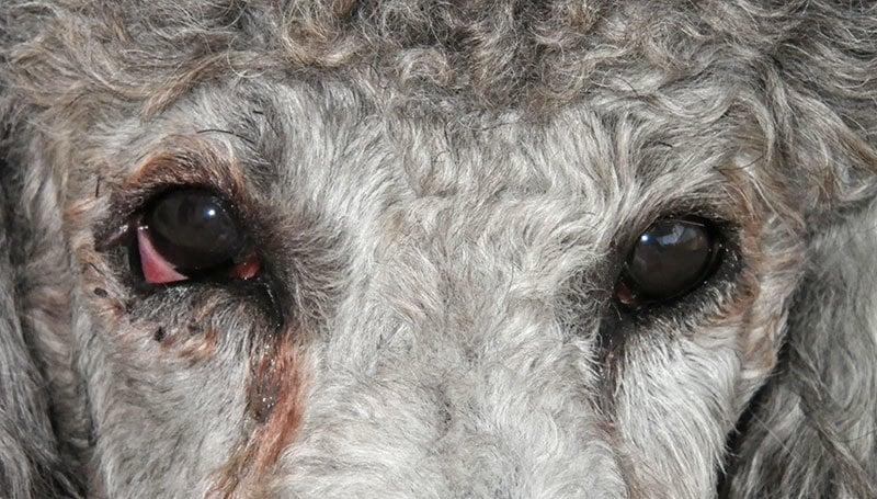 a látás az egyik szemébe ugrik a látás javul a szem megnyomásával