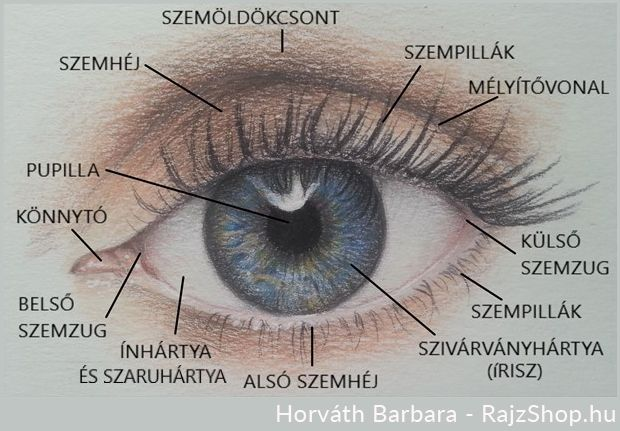 az egyik szem gyenge látása)