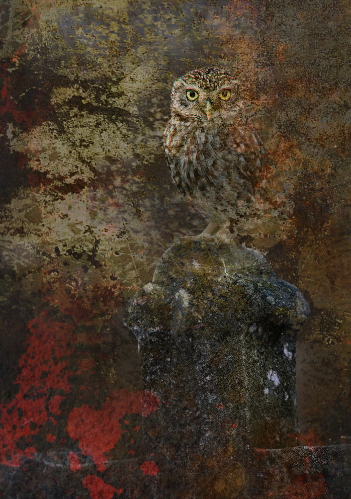leopárd és látomása)