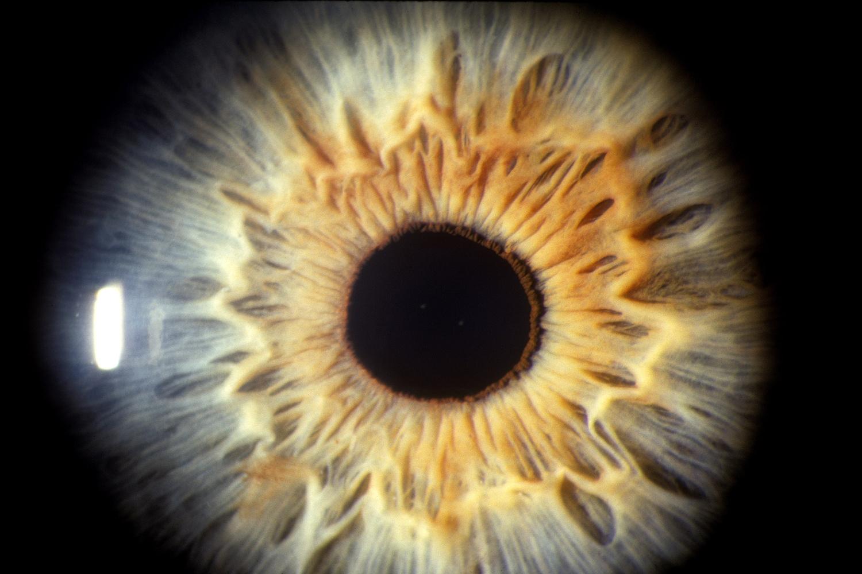 az emberi látás fejjel lefelé