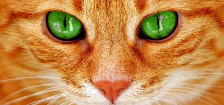 valami látással a szemében