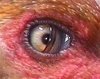 pupilla mérete és látása)