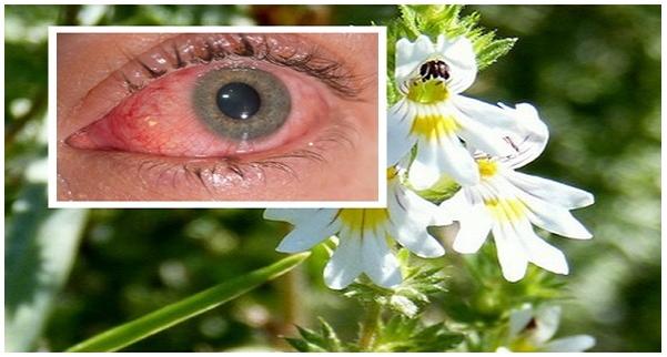 gyógyító növények látáshoz