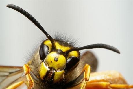 a méhek látványa és szeme
