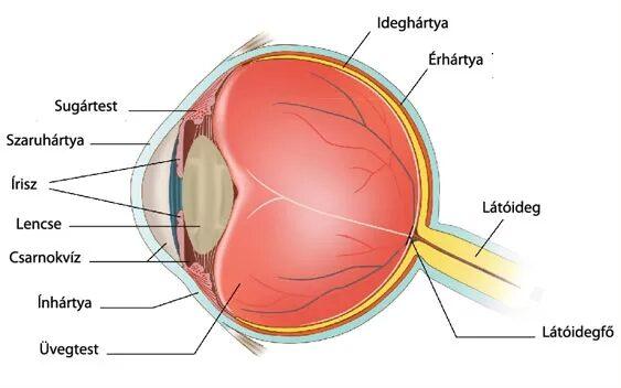 vörös szemek homályos látást)
