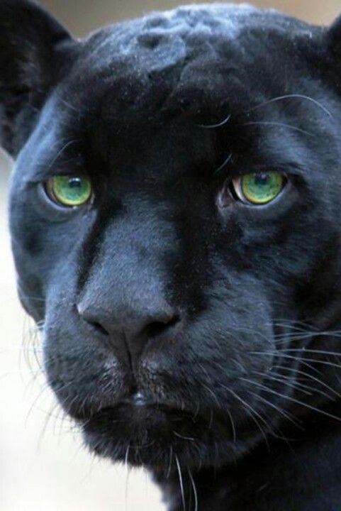 07 Látomás a vadállatokról :: Bibliai kincsestár