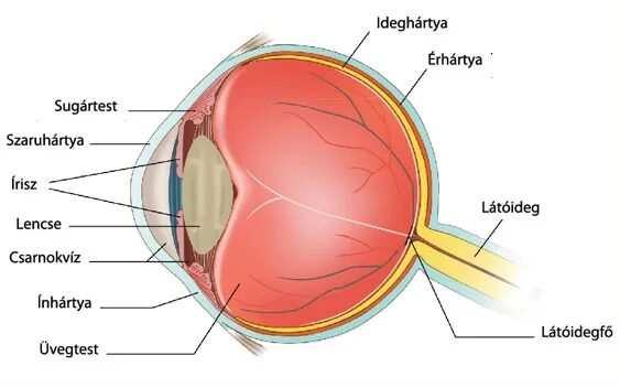 a látás jó és a szemek fájnak)