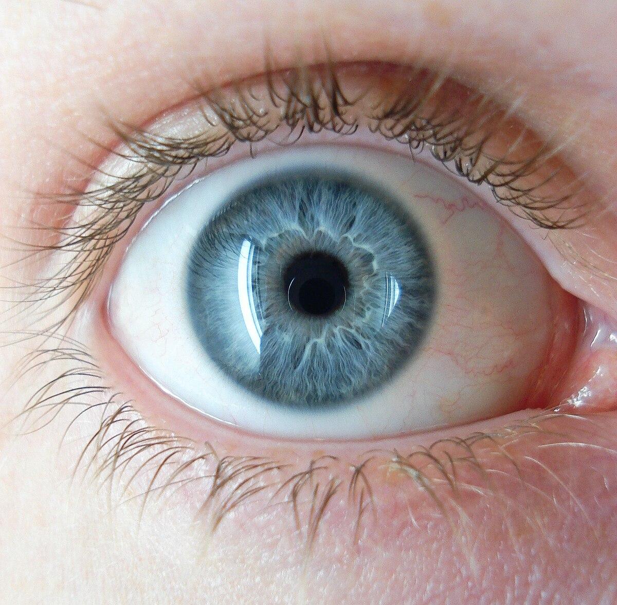 a pupillák tágítják a látást