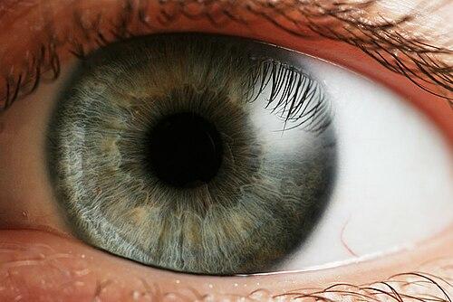 homályos emberi látás