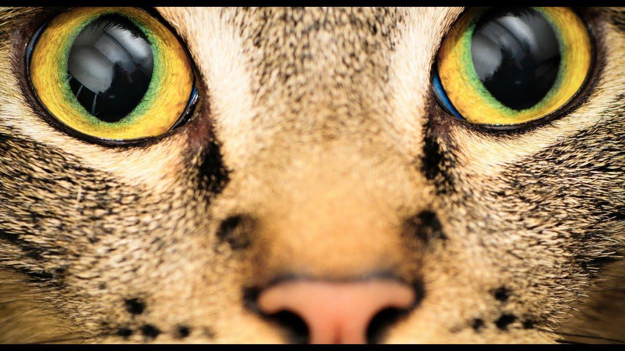 az emberek különböző látása