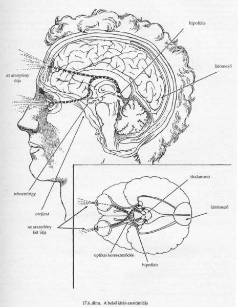 Szemlélek » Blog Archive » Mi az a belső látás?