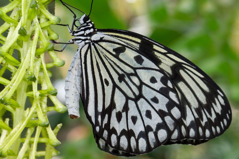 pillangók és szitakötők látása)