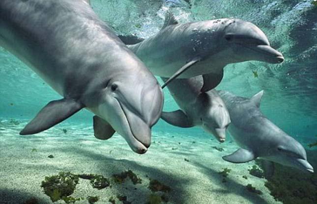 Furcsa látvány egy neonkéken világító delfin, de a jelenség normális | Az online férfimagazin