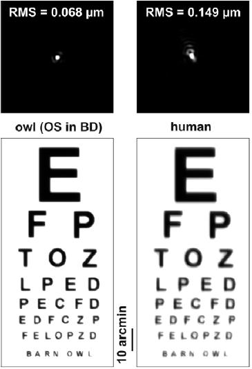 A madarak látása – Wikipédia