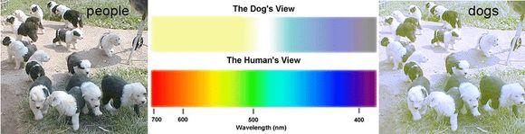 A látás fejlődése és a kancsalság