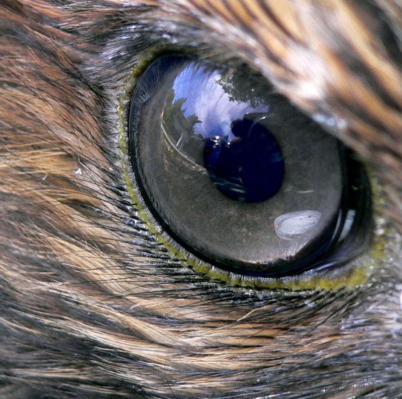 különböző látású szemek)