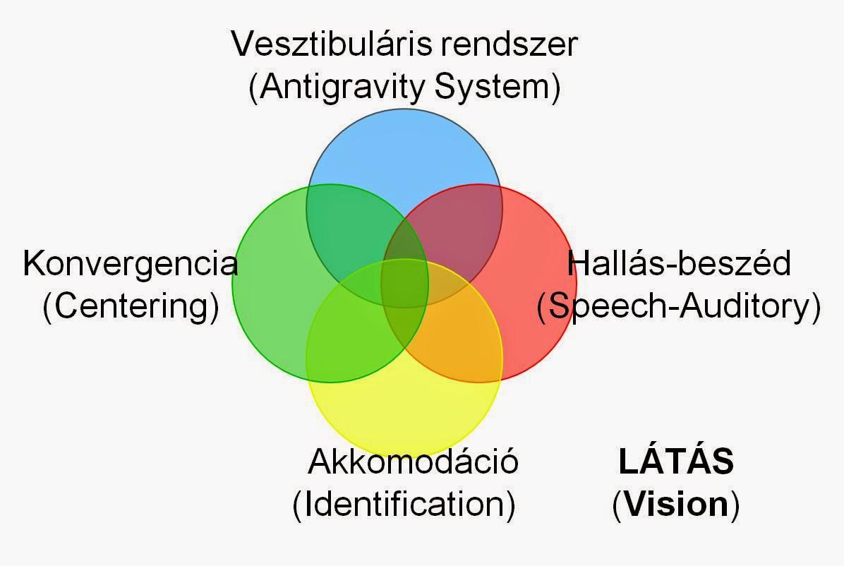 Percepció – a látás folyamatai