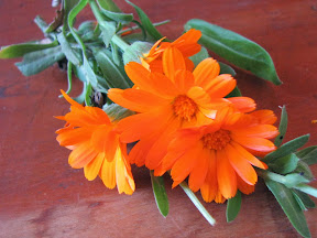 Körömvirág - (Calendula officinalis)