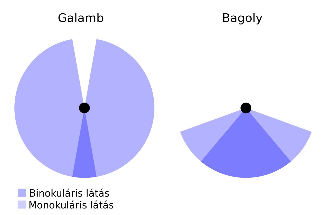 látás diagram)