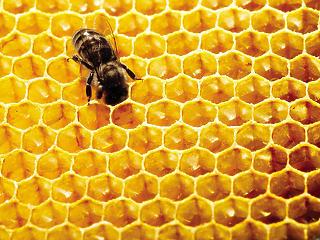 jövőkép a méz jutalékáról