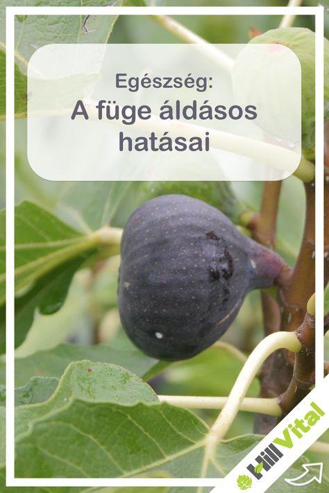 Szemes gyógynövények - Hörghurut September