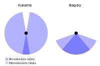 látás 0 van amblyopia látásélesség