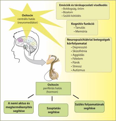 hipotalamusz látása